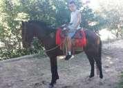Vendo cavalo bom de lida 4 anos