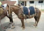 Cavalo baio ruano