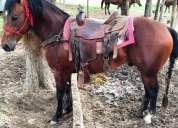 Venta de cavalo quarto de milha