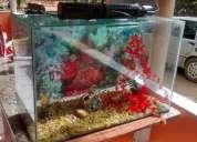 Vendo aquário de 100 lts + filtro e acessórios barato