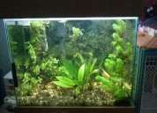 Excelente aquario completo