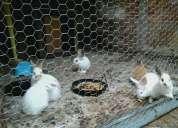 Procura coelhos ? nos temos , os melhores