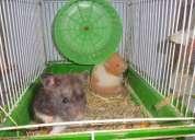 Vendo gaiolas para hamster e hamnster