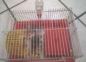 Vendo gaiola completa para hamister/outro animal 50,00