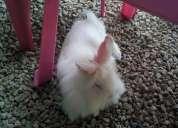 Doa-se mini coelho