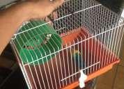 Vendo gaiola para hamster