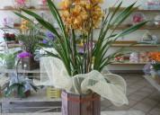 Villa das artes floricultura zona norte