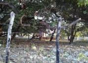 Excelente terreno guajiru - caucaia