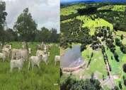 Fazenda 1 456 hectares