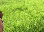 Vendo fazenda 88 hectares